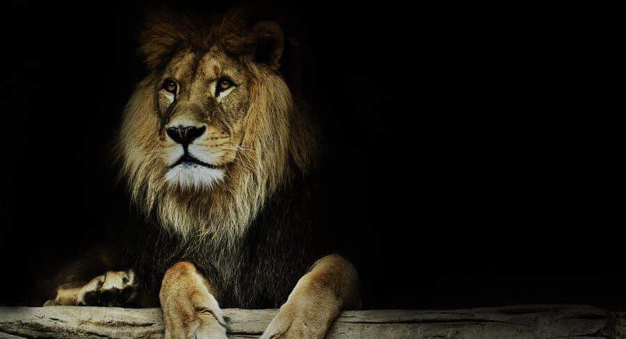 Höhle der Löwen